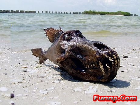 Funny looking fish pictures for kids cartoons captions for Funny fish pictures