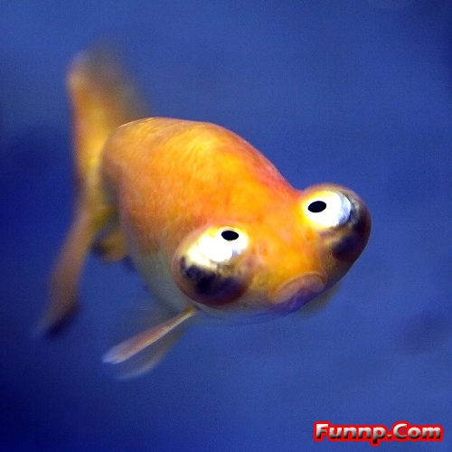 Funny Looking Fish Pictures For Kids Cartoons Captions